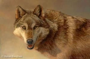 Portrait of a Gray Wolf